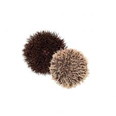 Jūros ežys (Sea Urchin), 150-200g, atvės., 1*3kg