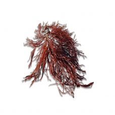 Jūros žolė  RED HORNWEED, 1kg, Olandija